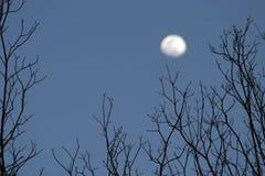 Bomen en Maan Royalty-vrije Stock Afbeeldingen