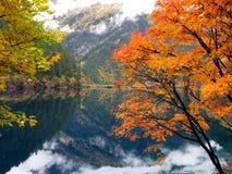 Bomen en Meer royalty-vrije stock afbeelding