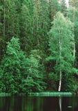 Bomen en meerbezinning royalty-vrije stock foto's