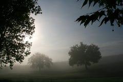 Bomen en mist royalty-vrije stock afbeelding