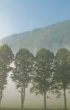 Bomen en mist Stock Foto's