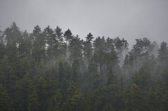 Bomen en mist royalty-vrije stock fotografie