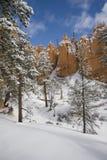 Bomen en Mountians in de Sneeuw Royalty-vrije Stock Foto's