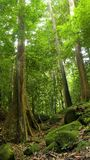Bomen en rotsen stock fotografie