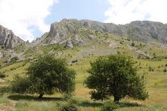 Bomen en rotsen Royalty-vrije Stock Afbeelding