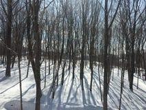 Bomen en schaduwen Royalty-vrije Stock Foto