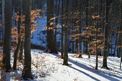Bomen en Sneeuw stock fotografie