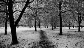 Bomen en Sneeuw Royalty-vrije Stock Foto's