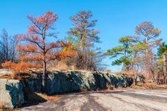Bomen en steengrond in het Park van de Steenberg, Georgië, de V.S. Stock Afbeeldingen