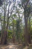 Bomen en steenweg in de tuin Royalty-vrije Stock Afbeeldingen