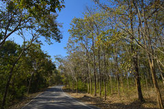 Bomen en straat royalty-vrije stock fotografie