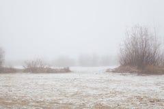 Bomen en struiken in de mist op een de winterstrand royalty-vrije stock fotografie