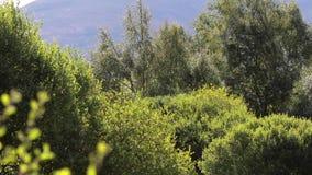 Bomen en struiken die de herfstkleuren tonen binnen een nauwe vallei in het rookkwartsen nationale park, Schotland stock video