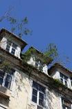 Bomen en struiken die op het dak groeien Royalty-vrije Stock Foto's