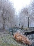 Bomen en struiken door de rivier in de winter royalty-vrije stock afbeelding