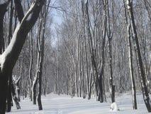 Bomen en struiken door sneeuw worden behandeld die Stock Foto's