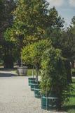 Bomen en struiken in emmers en potten Royalty-vrije Stock Afbeeldingen