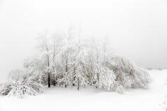 Bomen en struiken met sneeuw worden behandeld die Stock Foto