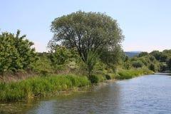 Bomen en struiken op een kanaalbank in de lente stock afbeelding