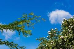 Bomen en struiken tegen de blauwe hemel stock afbeelding