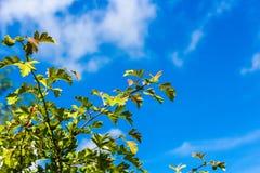 Bomen en struiken tegen de blauwe hemel royalty-vrije stock afbeelding