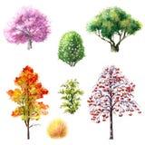 Bomen en struiken tijdens verschillende seizoenen royalty-vrije illustratie