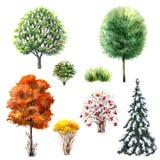 Bomen en struiken tijdens verschillende seizoenen vector illustratie