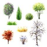 Bomen en struiken tijdens verschillende seizoenen stock illustratie