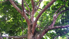 Bomen en takken Stock Foto's
