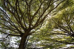 Bomen en takkendaglicht Royalty-vrije Stock Fotografie