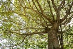 Bomen en takkendaglicht Royalty-vrije Stock Foto's