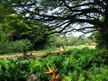 Bomen en weg Stock Afbeeldingen