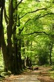 Bomen en weg Royalty-vrije Stock Fotografie