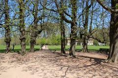Bomen en weg in Lyon royalty-vrije stock foto