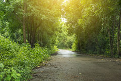 Bomen en wegen Stock Foto