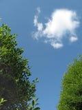 Bomen en wolk Stock Afbeeldingen