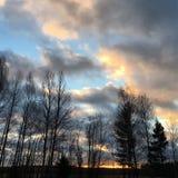 Bomen en wolken Royalty-vrije Stock Foto's