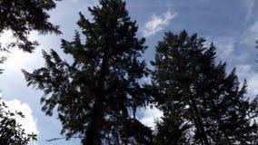 Bomen en wolken in heldere blauwe hemel in de zomer stock video