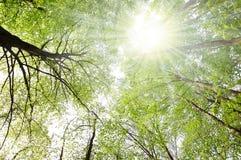 Bomen en zon Royalty-vrije Stock Afbeeldingen