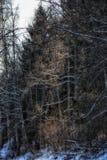 Bomen Forest Winter Outdoors Snow Light royalty-vrije stock afbeeldingen