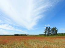 Bomen, gebied en mooie bewolkte hemel, Litouwen Stock Foto