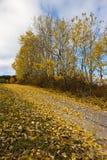 Bomen in geel Stock Fotografie