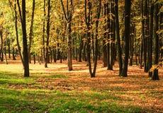 Bomen in gouden daling stock afbeeldingen