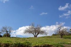 Bomen in groene weiden in lentetijd royalty-vrije stock afbeelding