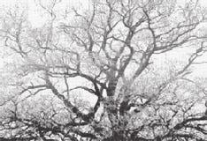 Bomen halftone zwart-witte illustratie Royalty-vrije Stock Fotografie
