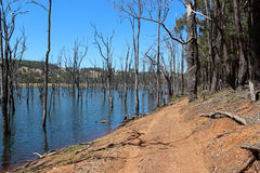 Bomen in Harvey dam West-Australië stock fotografie