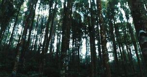 Bomen in het bos stock footage