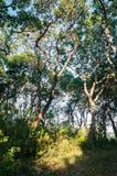 Bomen in het bos stock foto's