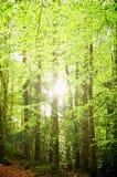 Bomen in het bos Stock Foto