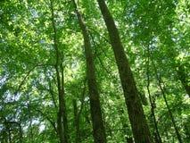 Bomen in het Bos Royalty-vrije Stock Fotografie